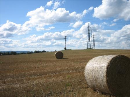 Just fields