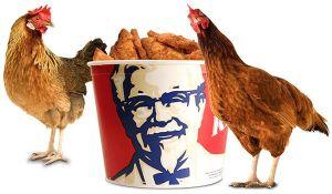 Kentucky_Fried_Chicken